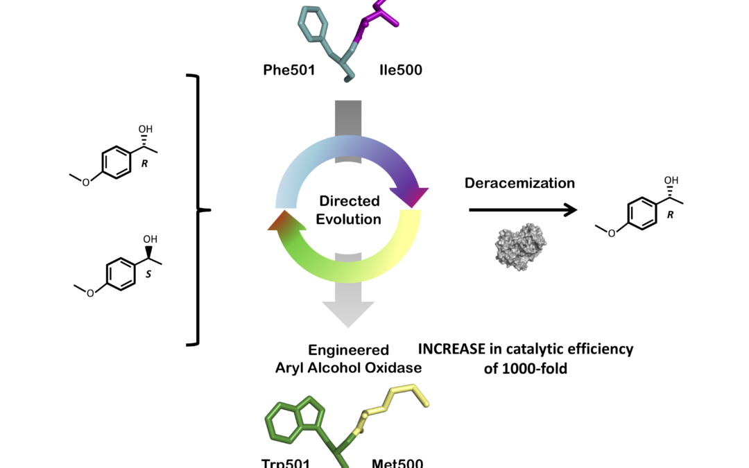 Structure-guided evolution of aryl alcohol oxidase from Pleurotus eryingii for the selective oxidation of secondary benzyl alcohols
